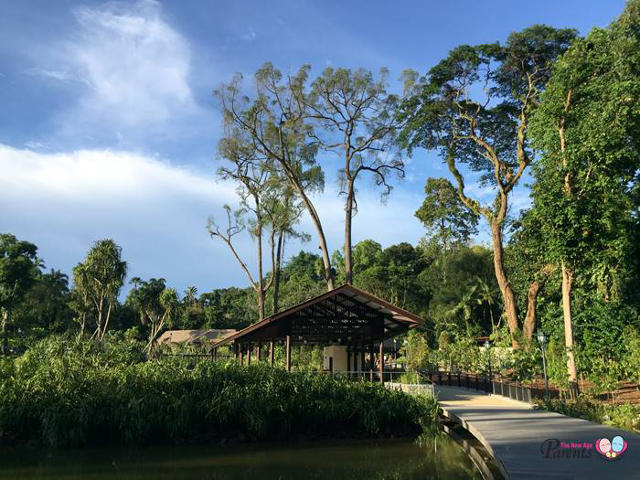 the learning forest at singapore botanic gardens