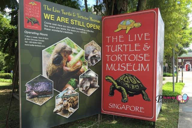 turtle and tortoise museum ORTO