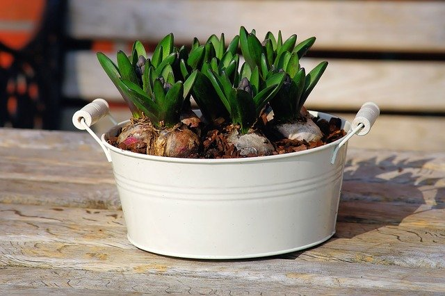 container garden at home