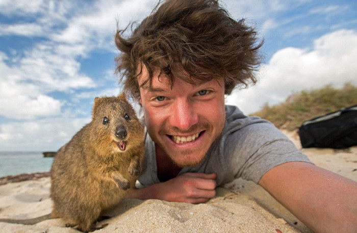 Take a selfie with quokka at Rottnest Island