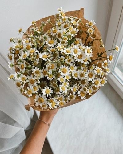 Little Flower Hut Flower Baby Names for Girls
