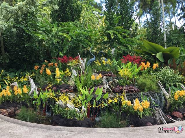 national orchid garden display