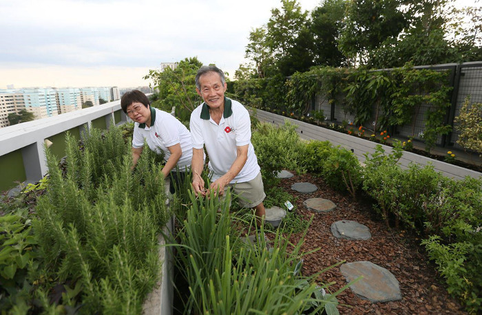 Active Ageing Hub Gardening Activities for seniors