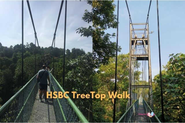 HSBC TreeTop Walk bridge