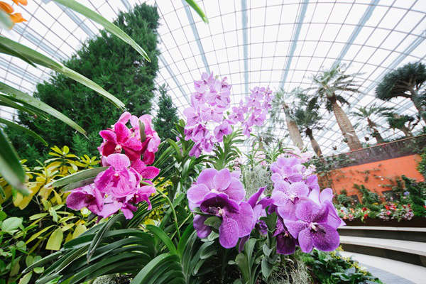 Orchid extravaganza gardens by the bay