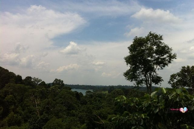 View from HSBC TreeTop Walk.jpg