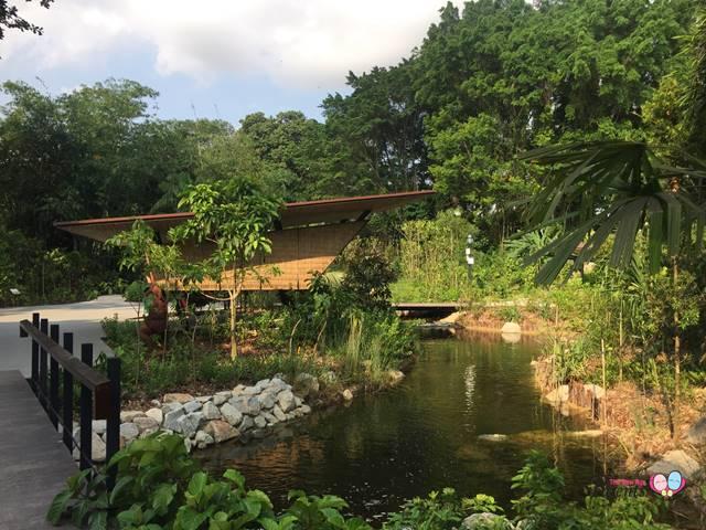 ethnobotany garden singapore pond