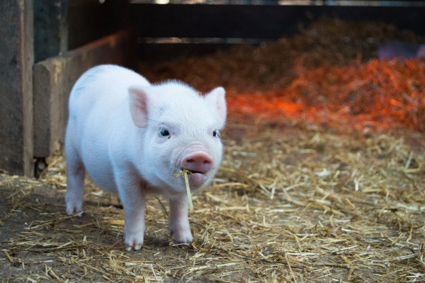 Auspicious Chinese Names For Newborns In The Year Of The Pig