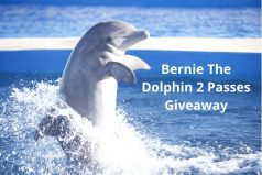 Bernie The Dolphin 2 Complimentary Passes Giveaway