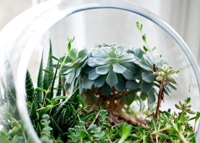 DIY Plant Terrarium