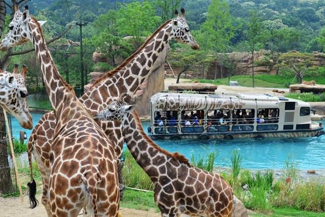 Everland largest theme park in Korea