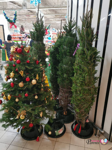 real christmas tree in Giant