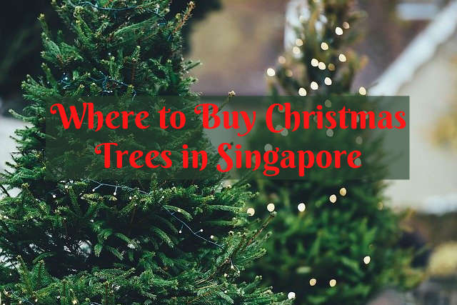 where to buy christmas tree in singapore