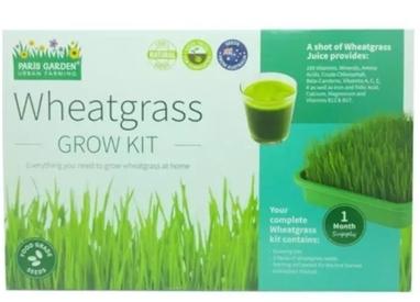 Indoor Gardening Wheatgrass Kit Shopee Singapore