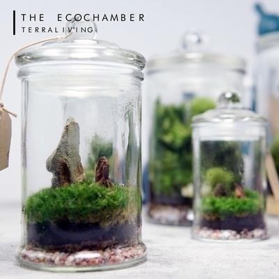 Live Moss Terrarium EcoChamber Shopee Singapore