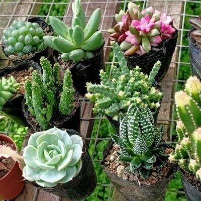 Succulent Plants Shopee Singapore