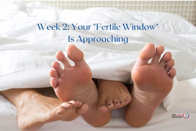 Week 2 Of Pregnancy – Your 'Fertile Window' Is Approaching