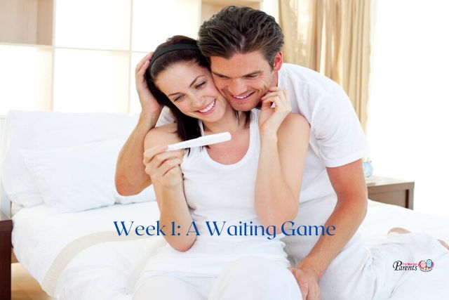 Week 1 Of Pregnancy – A Waiting Game