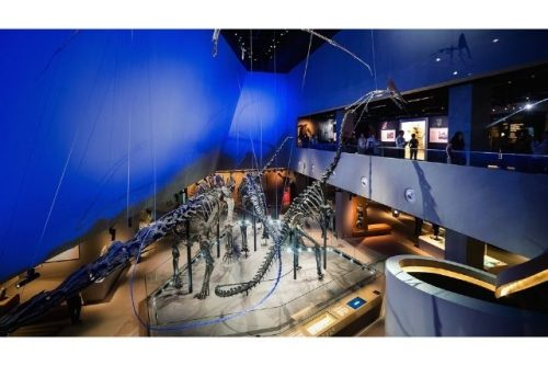 Lee Kong Chian Natural History Museum Singapore lkcnhm