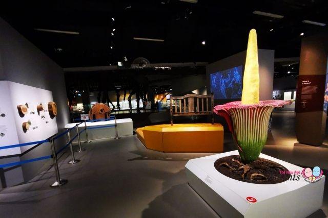 lee kong chian museum singapore