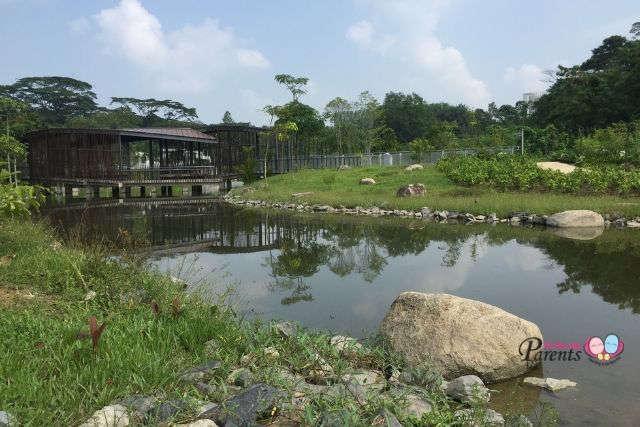 Jurong Eco Garden Freshwater Swamp Forest