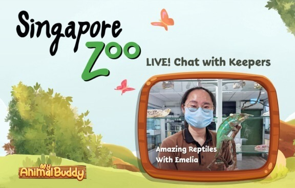 My Animal Buddy Live Chat with our Keepers