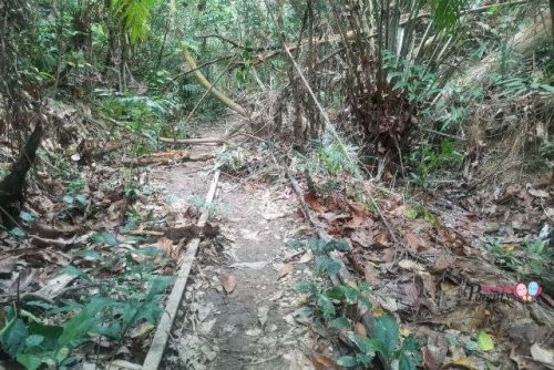 jurong railway tracks clementi forest
