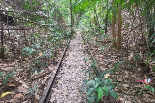 jurong railway tracks maju forest