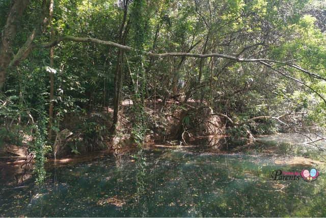 Abandoned Keppel Hill Reservoir
