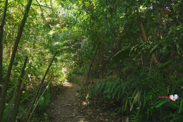 Forest Trail to Keppel Hill Reservoir