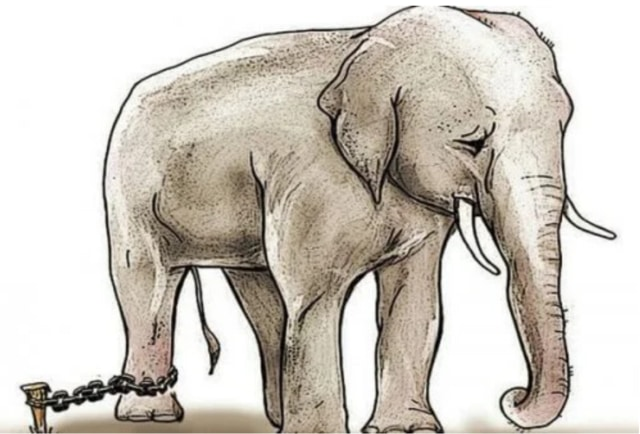 The story of the chained elephant