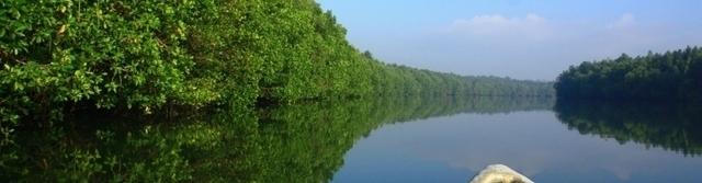 Desaru Linting Wetlands