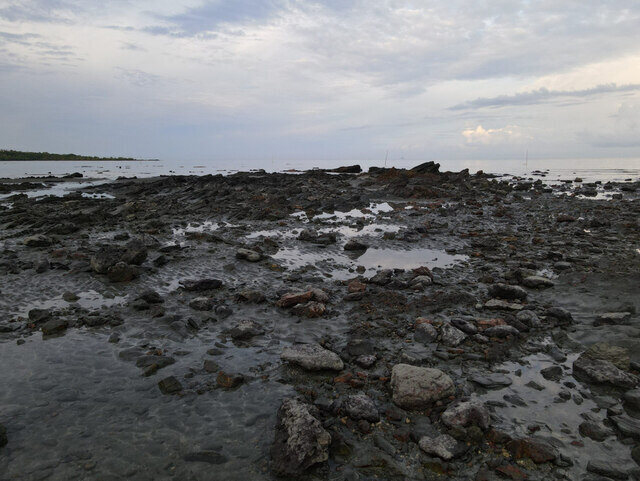 Desaru Wetlands Nature