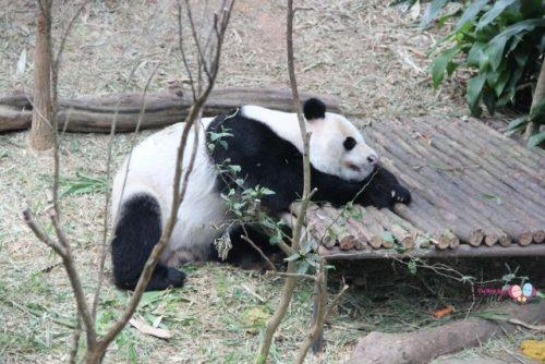 panda river safari