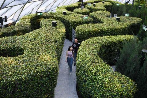 Hedge Maze Lifestyle Landscape Changi Jewel