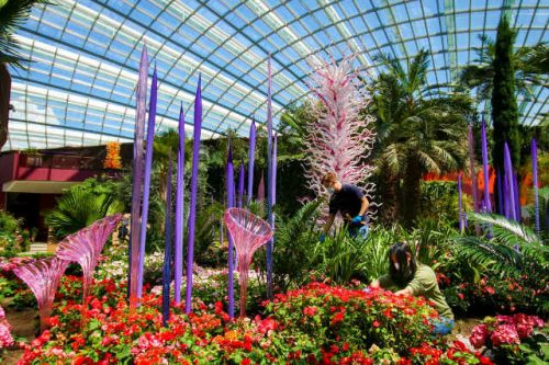 Dale Chihuly Glass in Bloom
