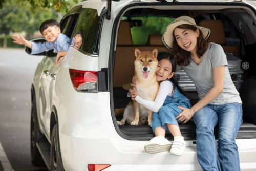 adopting a dog in singapore valuechampion