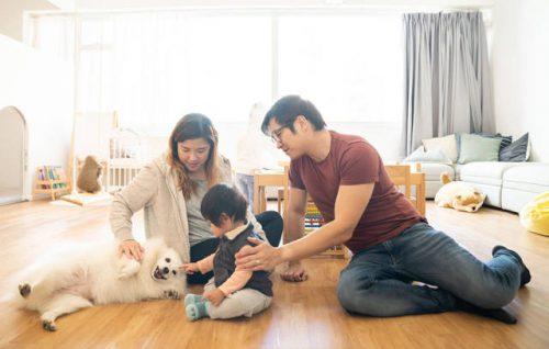 cost of adopting dogs cats singapore valuechampion