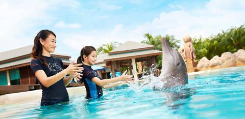 Dolphin Island Interaction Programme