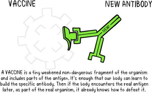 vaccines antibody illustration childhood vaccinations GEH