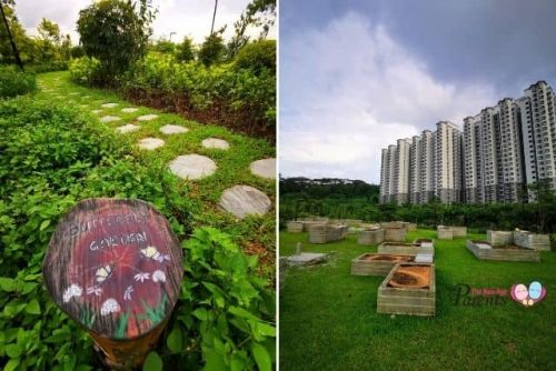 Allotment Garden at Bukit Gombak Park